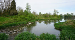 Photo of Catkin Marsh