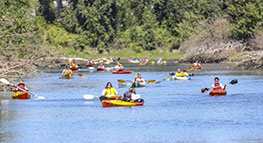 Photo of people kayaking on the Columbia Slough during the Columbia Slough Watershed Council annual regatta
