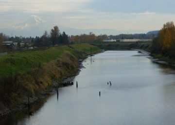 Photo of the Columbia Slough and levee